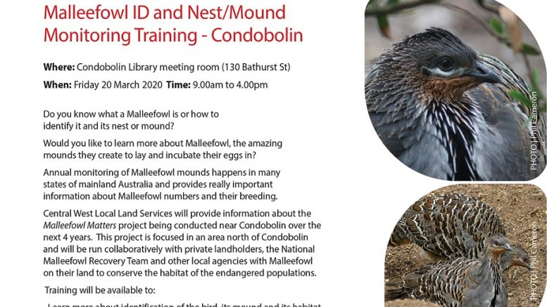 MALLEEFOWL ID AND NEST/MOUND MONITORING TRAINING – CONDOBOLIN - FRIDAY, 20 MARCH