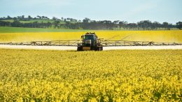NSW Department of Primary Industries Senior Plant Pathologist Kurt Lindbeck is encouraging growers to weigh up the disease risks for 2021 crops and alter paddock selection, crop choice and fungicide programs where necessary. Image Credit: GDRC.