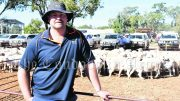 Andre Haworth (and wife Tarmia) purchased a pen of 53 White Dorper Ewe lambs for $432 a head, as well as 106 older ewes for $360 and a pen of 61 ewes for $330 a head. Image Credit: Melissa Blewitt.