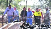 The crowd eagerly watches on at the sheep sale.
