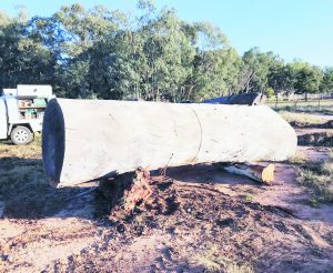 The Redgum log, which measured nearly five metres in length and 1.2 metres in diameter. Image Credit: BK Carving Facebook Page.