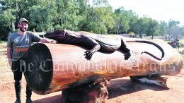 Chainsaw artist Brandon Kroon (BK Carving) has completed a magnificent Redgum Goanna carving from a log that measured nearly five metres in length and 1.2 metres in diameter. It is expected the Redgum Goanna will grace the outside of Condobolin's new Visitor Centre, which is scheduled for completion in June 2022. Image Credit: Melissa Blewitt.