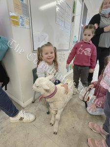 There was also a special visitor on the day – a baby lamb whose wool was coloured in honour of the day. Image Credit: Melissa Blewitt.