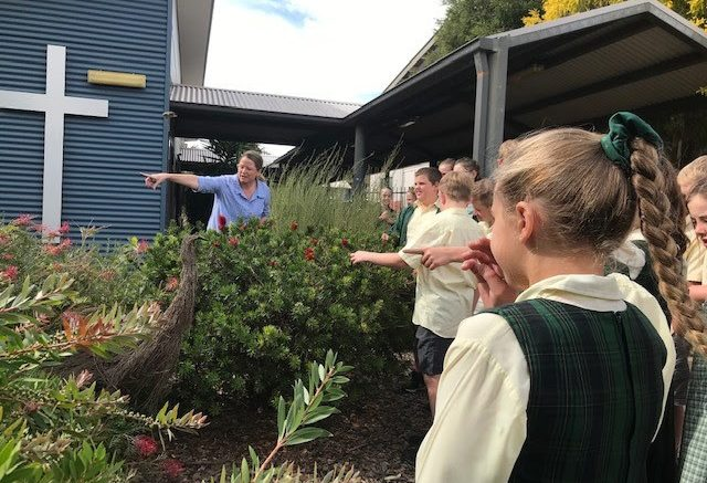 A Butterfly Garden will be created at St Joseph's Parish School Condobolin after they received funding through this year's Central West Local Land Services Resilient Communities Small Grants program. Image Credit: Central West Local Land Services.