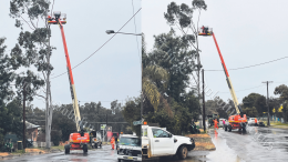 Tree removal and pruning has been taking place around Condobolin. Eleven trees have been removed from Harding Avenue and McDonnell Street in preparation for, two major road projects to go ahead. The total cost of the Harding Street Project is $800,000 and the Primary School Safety Project is $1,680,000. Image Credit: Melissa Blewitt.