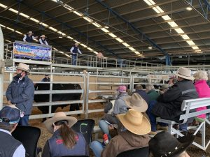 The Moogenilla Angus annual bull sale was a big success, with a full clearance at an average of $14,584.  Images Contributed.