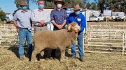 John Macarthur, Peter Morley, from Boomey Park in Molong with his property manager, Gus Shannon, and vendor Russell Jones from Darriwell Merinos in Trundle with the $20,000 sale topper. Image Credit: Darriwell Merino and Poll Merino Studs Facebook Page.